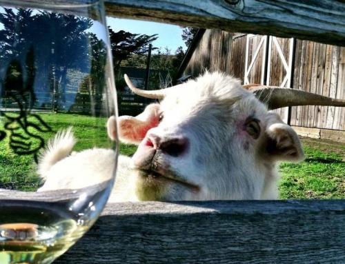 Goat Wine Tasting
